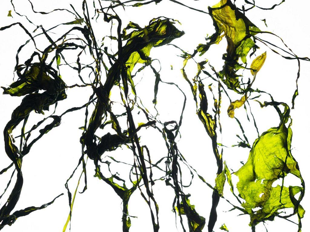 "Wettbewerbsbeitrag Darja Preuss, Fotowettbewerb ""Beauty of Science"""