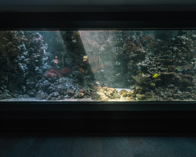 """Costello Pilsner - """"Habitat-In der Natur gibt es keine Geraden"""""""