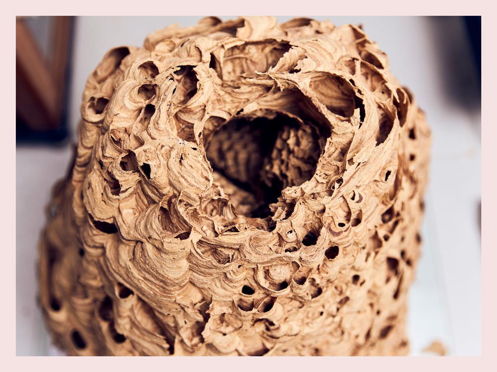 "1. Platz Fotowettbewerb ""The Beauty of Science"", Paulina Hildesheim"